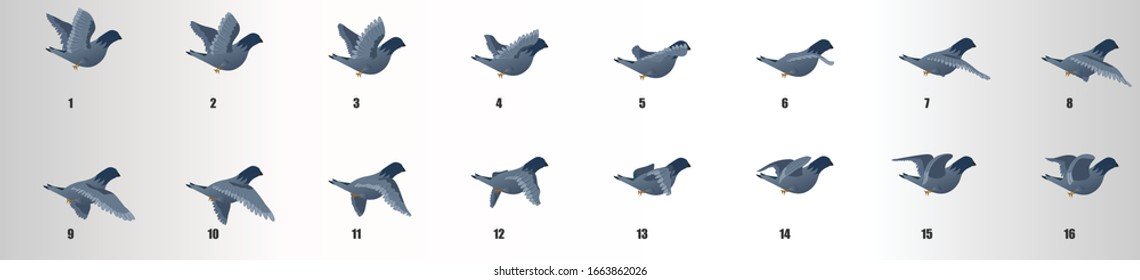 Pigeon flying animation sequence, loop animation sprite sheet