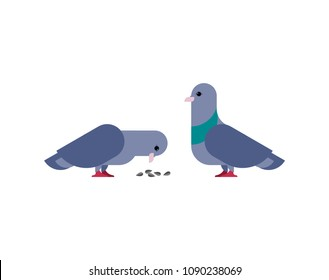 Pigeon isolated. Dove on white background. Vector illustration