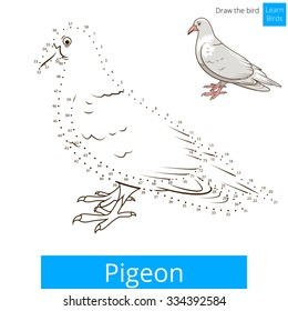 Pigeon Learn Birds Educational Game To Draw Vector Illustration