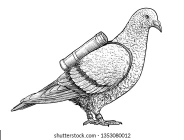 Pigeon with message illustration, drawing, engraving, ink, line art, vector