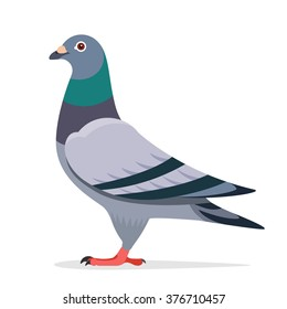 Pigeon vector character color flat illustration pigeon image
