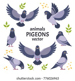 Pigeons collection. Vector illustration of gray cartoon pigeon in different poses. Isolated on white background.