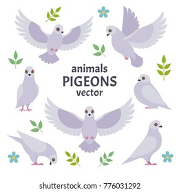 Pigeons collection. Vector illustration of white cartoon pigeon in different poses. Isolated on white background.