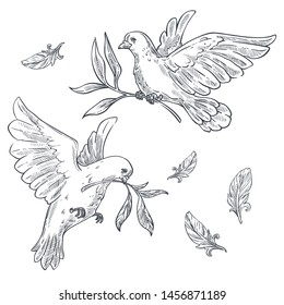 Pigeons or doves flying with olive branch or twig in beak vector isolated bird sketches flight wild animal peace and religion symbol wings, plumage purity and hope symbolic creature with claws