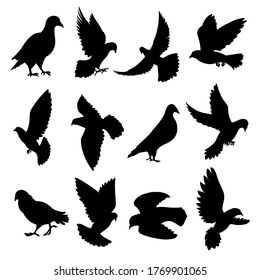 Pigeons flying, sitting, standing, going black silhouette icons set isolated on white. Doves, totem birds pictograms collection, logos. Symbol of love, peace vector elements for infographic, web.