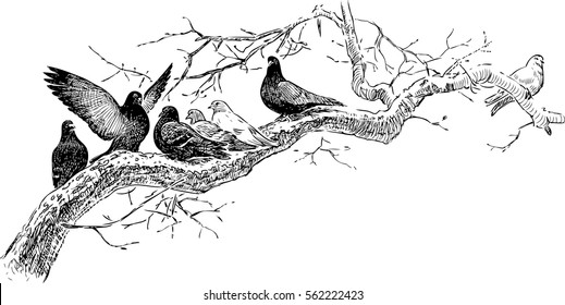 pigeons on the tree branch