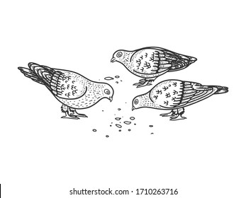 pigeons peck seeds on the ground sketch engraving vector illustration. T-shirt apparel print design. Scratch board imitation. Black and white hand drawn image.