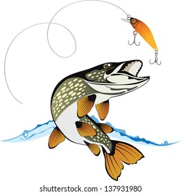 Pike and fishing lure with water splash isolated on a white background, colored vector illustration