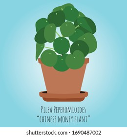Pilea peperomioides ( Chinese money plant )