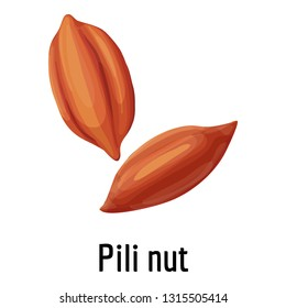 Pili nut icon. Cartoon of pili nut vector icon for web design isolated on white background
