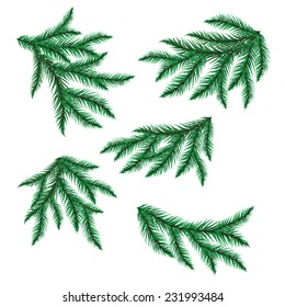 Pine branch isolated on white. Vector illustration.