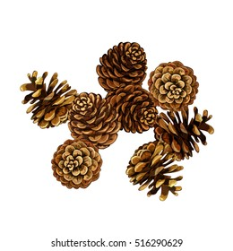 Pine cone vector illustration. set. coniferous tree cones.
