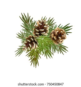 Pine cones, Christmas tree. Decorative element for Christmas and New Year.Vector illustration.