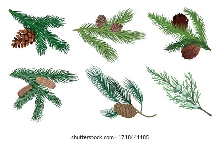 Pine and Fir Tree Branches with Fir Cones Vector Set