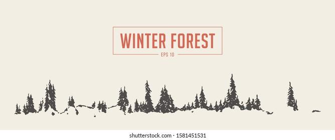 Pine forest background. Vector illustration, hand drawn, sketch
