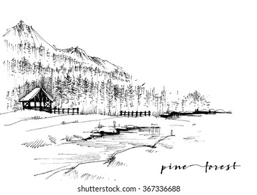 Pine forest sketch