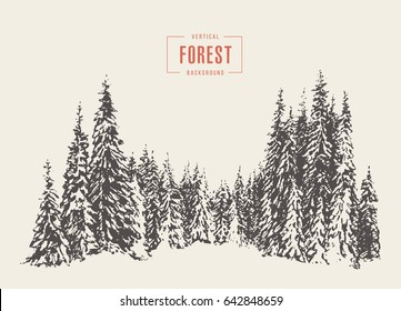 Pine forest, vector illustration, hand drawn, sketch