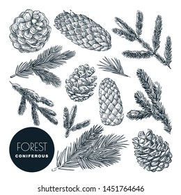 Pine and spruce tree branches and cones set. Vector sketch hand drawn illustration. Winter holiday, Christmas or New Year design elements. Autumn coniferous forest icons.