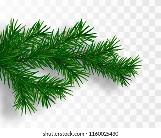 Pine tree branch. Vector Christmas tree isolated