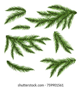 Pine tree branches isolated on white. Vector illustration.