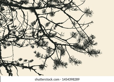 pine tree and branches silhouette. detailed vector illustration