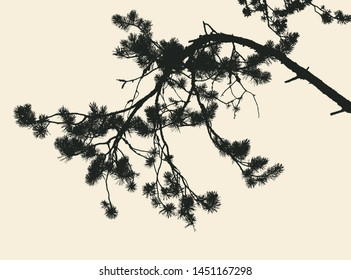 pine tree and branches silhouette. vector illustration