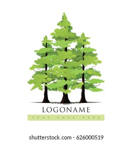 Pine Tree, Pine Forest Vector Illustration.
