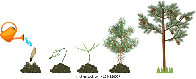 Plant Life Cycle Images, Stock Photos & Vectors Shutterstock