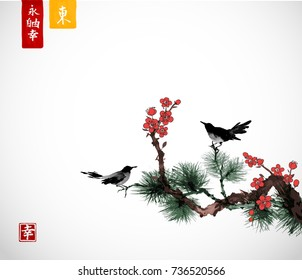 Pine tree, sakura cherry tree in blossom and little black birds on white background. Traditional oriental ink painting sumi-e, u-sin, go-hua. Contains hieroglyphs - eternity, freedom, happiness, east