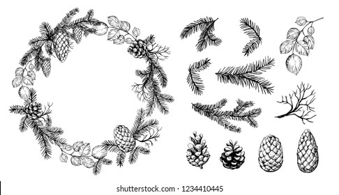 Pine wreath with cone and fir brunches. Vector illustration.