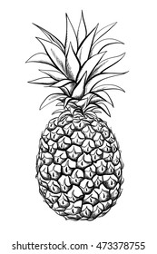 Pineapple fruit. Vector black and white illustration. Coloring page
