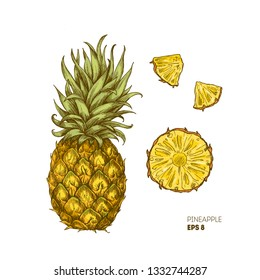 Pineapple illustration. Engraved style illustration. Pineapple slices. Vector illustration