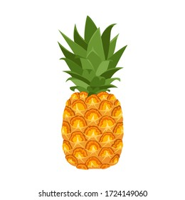 Pineapple isolated on a white background. Vector illustration of tropical fruit in cartoon flat style.