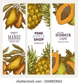 Pineapple, Mango, Papya fruit banner collection. Vintage design templates. Botanical fruit. Engraved pineapple. Vector illustration