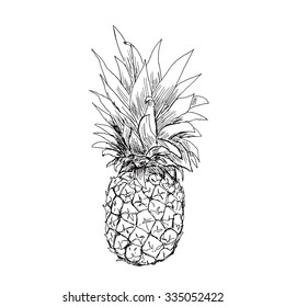 The pineapple sketch. Vector illustration.