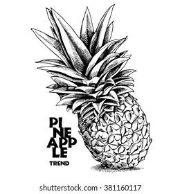 Pineapple. Vector black and white illustration.