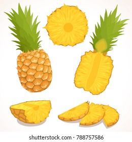 Pineapple vector. A detailed illustration of the whole, half and chopped ananas. Set isolated on white background.