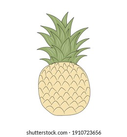Pineapple vector illustration, isolated colored hand drawn linear style