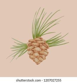 Pinecone in watercolor. Vector illustration