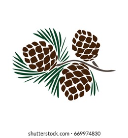 pinecones on pine branch
