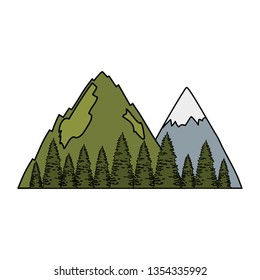pines trees forest with mountains scene