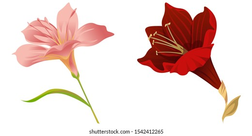 Pink Amaryllis. Purple Amaryllis. Vector illustration. Isolated illustration element. Floral botanical flower. Wild leaf wildflower isolated. Exotic tropical hawaiian jungle.