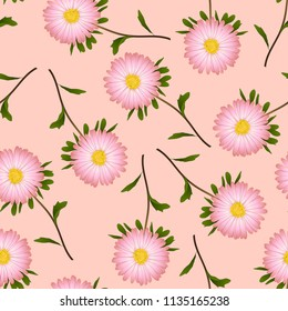 Pink Aster, Daisy on Pink Background. Vector Illustration.