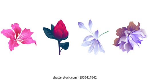 Pink Bauhinia Purpurea. Red Vriesea. Violet Agapanthus Lily. Violet Clematis. Vector illustration. Isolated illustration element. Floral botanical flower. Wild leaf wildflower isolated. Exotic.