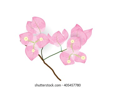 pink bougainvillea flowers  for object or background
