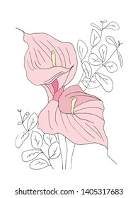Pink Calla Lily Flower with black and white  foliage