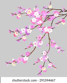 фотообои Pink Cherry blossom, sakura flowers isolated on gray background. Vector Illustration