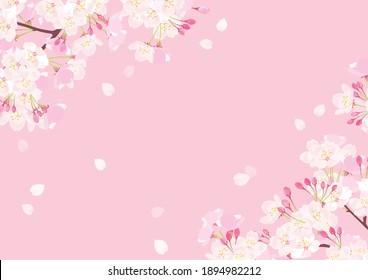 Pink Cherry blossom vector Illustration