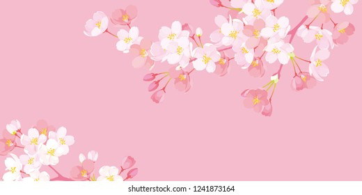 Pink Cherry blossom,Vector Illustration
