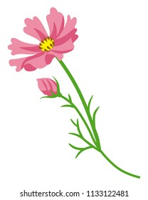 Pink colored Cosmos flower - flat clip art